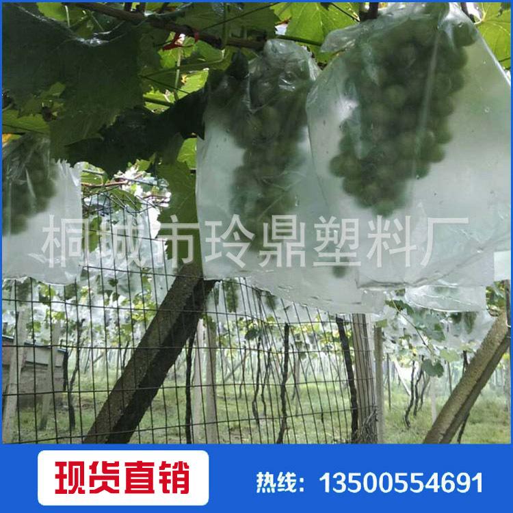 青枣芒果苹果葡萄及各种水果专用  塑料套袋  欢迎订购
