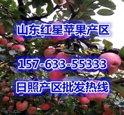 水蜜桃批发价格行情突围桃子批发市场毛桃产地红不软桃子批发网