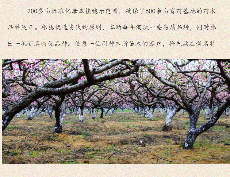 安徽省寿县润丰苗木种植有限公司果树苗木种植网483 作者: 来源: 发布时间:2019-3-17 22:24