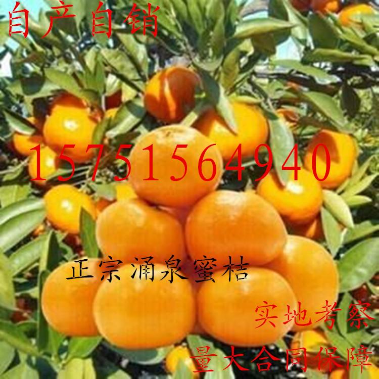 涌泉蜜桔树苗 正宗临海无核蜜桔苗 嫁接橘子苗 早熟超甜柑桔树苗